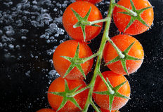 Fresh tomatoes in water Stock Photo