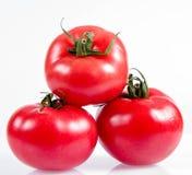 Fresh tomatoe royalty free stock photo