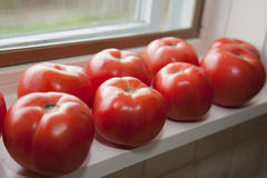 Fresh tomatoes on windowsill. Red fresh tomatoes on window board stock photo