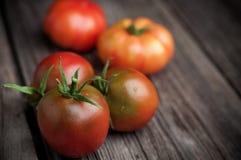 Fresh tomatoes on wooden background Stock Image