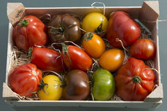 Different tomatoes in wooden box Royalty Free Stock Photography