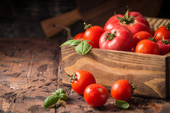 Fresh tomatoes in a wooden crate Royalty Free Stock Photos