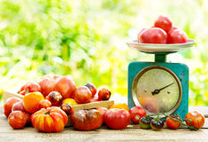 Fresh tomatoes on wooden table Stock Image