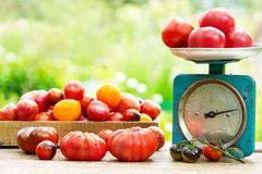 Fresh tomatoes on wooden table Royalty Free Stock Image