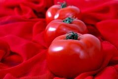 Fresh tomatos Royalty Free Stock Image
