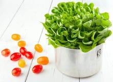 Fresh tomatos and green salad Royalty Free Stock Image