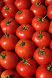Fresh tomatos for sale in a market Royalty Free Stock Photos