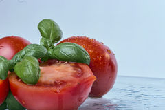 Fresh Tomatos. Wet and fresh Tomato slices and Basil Royalty Free Stock Image