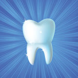 Fresh tooth vector background Royalty Free Stock Image