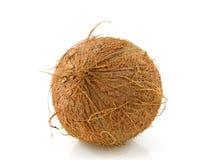 Fresh topical coconut Stock Photo