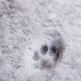 Fresh trace of cat`s paw print on the white snow. Close-up royalty free stock photography