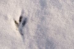 Fresh tracks of the birds on the white snow, top view.  Royalty Free Stock Image