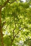 Fresh tree background Royalty Free Stock Images