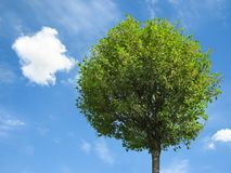 Fresh tree with blue sky Royalty Free Stock Photography
