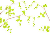 Fresh tree branch border Royalty Free Stock Image