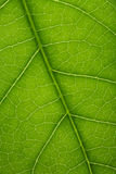 Fresh tree leaf texture Stock Images