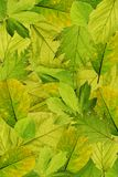 Fresh tree leaves background Royalty Free Stock Images