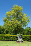 Fresh tree in park. Colorful large green beech tree with young leaves in formal urban park with hedge and white flowers in rustic pot royalty free stock photo