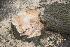 Fresh tree stump Royalty Free Stock Images