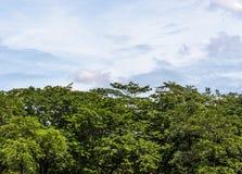 Fresh tree Stock Image