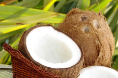 Fresh tropical coconuts Stock Photo