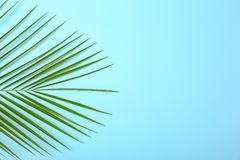 Fresh tropical date palm leaf on color background. Top view royalty free stock photo