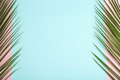 Fresh tropical date palm leaves. On color background, top view royalty free stock photo