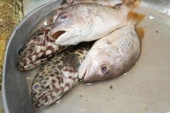 Fresh tropical exotic fish at farmers market. Fresh fish at market, Samui island, Thailand Stock Photos