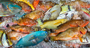 Fresh tropical fish on ice Royalty Free Stock Photography