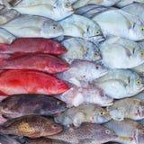 Fresh tropical fish on ice in the Kota Kinabalu market Royalty Free Stock Image
