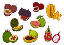 Fresh tropical fruits sketch icons Royalty Free Stock Image