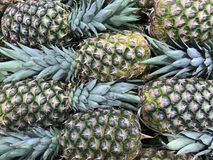 Fresh Tropical Pineapple Background Royalty Free Stock Image