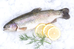 Fresh trout. With lemons and dill Royalty Free Stock Photography