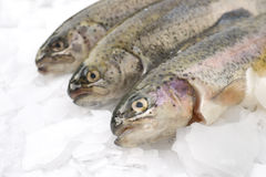 Fresh trout. With lemons and dill royalty free stock images