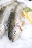 Fresh trout. With lemons and dill Stock Photo