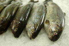 Fresh trout. At fish market Royalty Free Stock Images