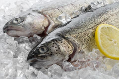 Fresh trout Stock Photography