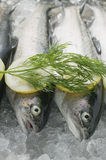 Fresh trout Stock Photo