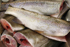 Fresh trout Stock Image