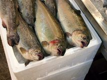 Fresh Trout, Athens Fish Market Stock Images