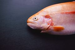 Fresh trout on black table, raw and uncut fish Royalty Free Stock Image