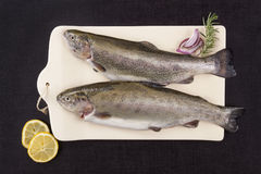 Fresh trout fish on chopping board. Stock Images