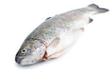 Fresh trout fish, diagonal Stock Photos