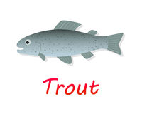 Fresh Trout fish in flat style, vector Stock Images