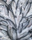 Fresh trout fish on ice for sale, close-up. Fresh trout fish on ice for sale stock photo
