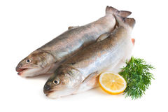Fresh trout Royalty Free Stock Photo