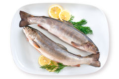 Fresh trout. Trout fish with fresh lemon and herbs on plate stock photos