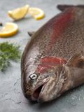Fresh trout. Slices of lemon, dill on a gray stone background royalty free stock photos