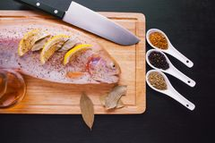 Fresh trout and ingredients to prepare fish dishes on black table. Fresh trout and ingredients to prepare fish dishes on a black table Stock Image