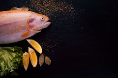 Fresh trout and ingredients to prepare fish dishes on black table, free space for text on the right. Fresh trout and ingredients to prepare fish dishes on a Royalty Free Stock Images